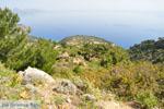 Natuur in het oosten van Karpathos   De Griekse Gids 008